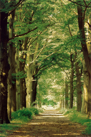 42-16592848_24_36forest-path-posters